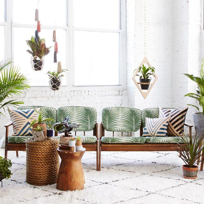 საუკეთესო მცენარეები სახლისთვის